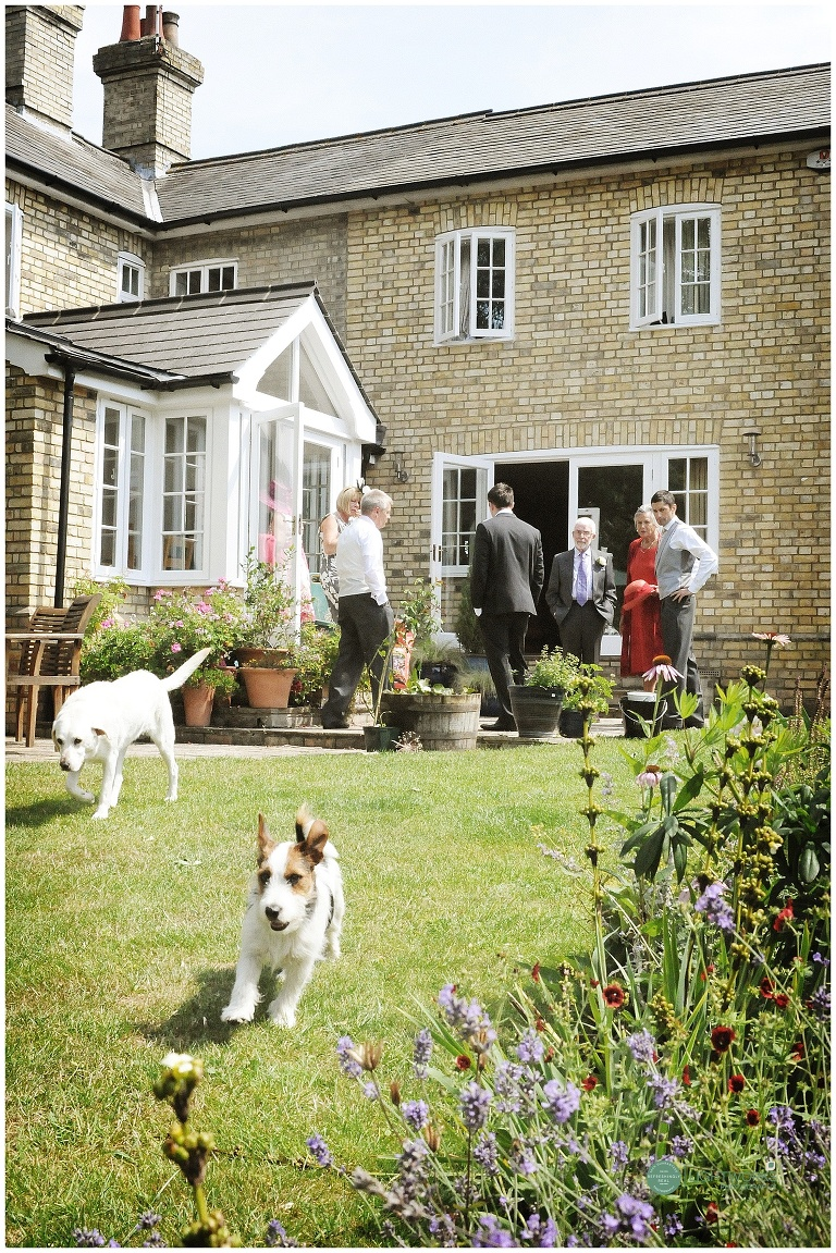wedding guests and dogs